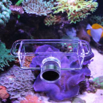 Seahorse Buddy feeder / feeding station Gallery 1