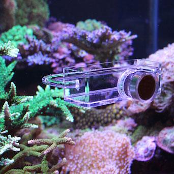 Seahorse Buddy feeder / feeding station Gallery 11