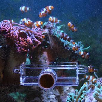 Seahorse Buddy feeder / feeding station Gallery 12