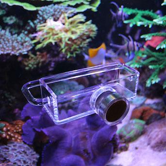 Seahorse Buddy feeder / feeding station Gallery 3