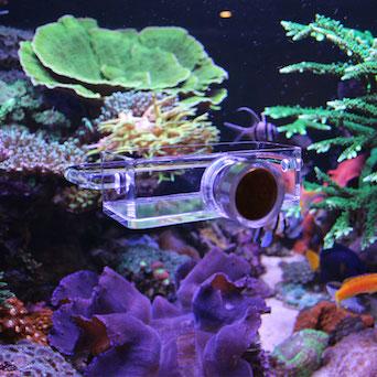 Seahorse Buddy feeder / feeding station Gallery 4