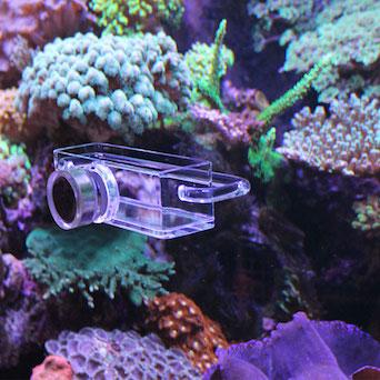Seahorse Buddy feeder / feeding station Gallery 5