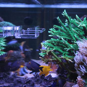 Seahorse Buddy feeder / feeding station Gallery 9