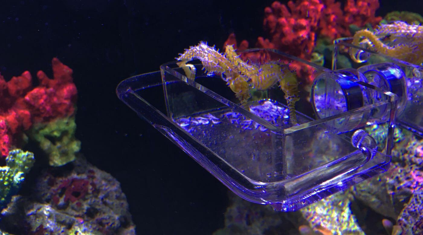 Seahorse Feeder Feeding Station Slider2