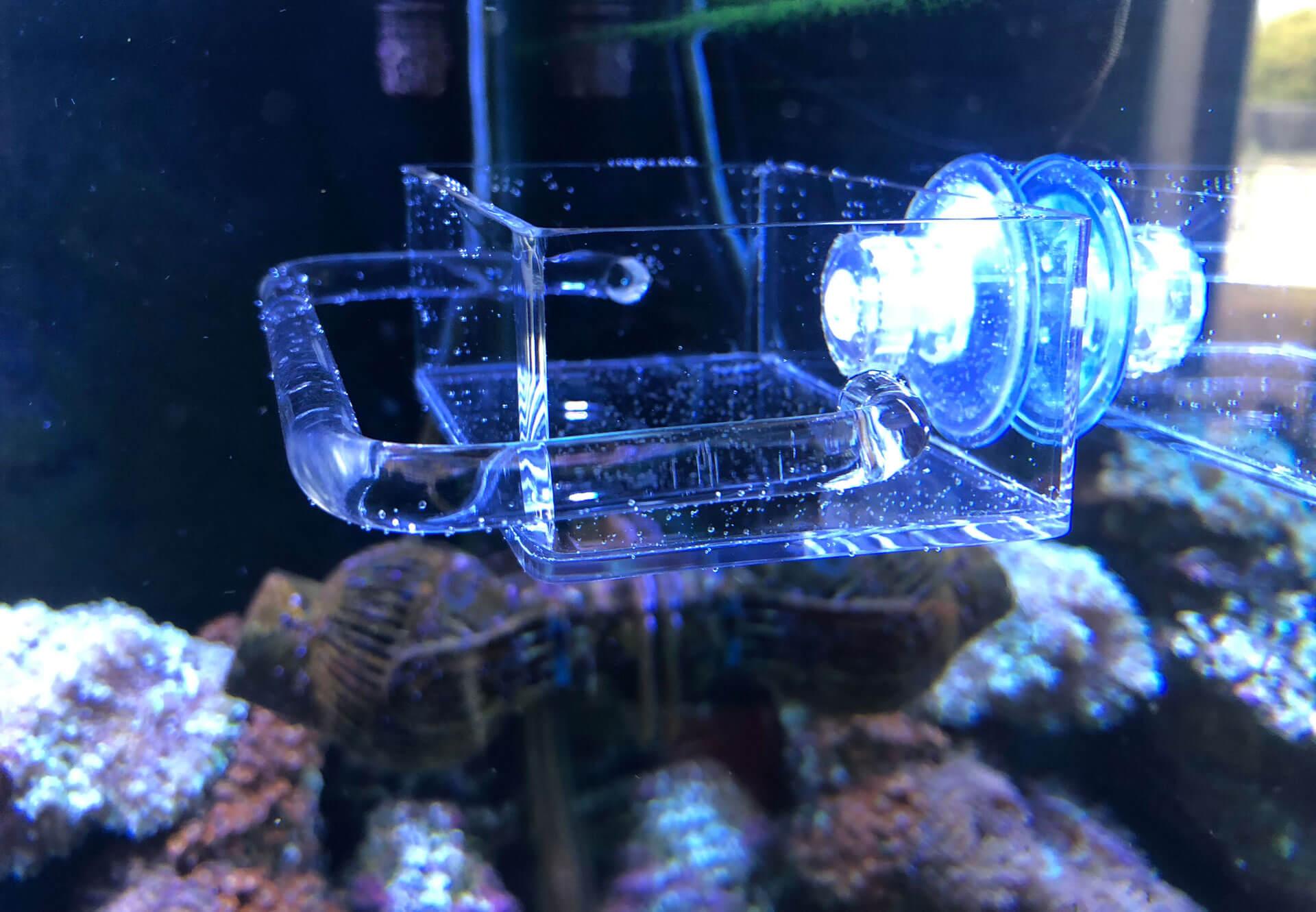 Seahorse Buddy Seahorse Feeder v2